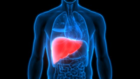 See how Weight Loss can help heal lasting damage caused by fatty liver - 093f5d6ec60d00146e8be5949ebf7a26 quality uhq resize 720 - See how Weight Loss can help heal lasting damage caused by fatty liver See how Weight Loss can help heal lasting damage caused by fatty liver - 093f5d6ec60d00146e8be5949ebf7a26 quality uhq resize 720 - See how Weight Loss can help heal lasting damage caused by fatty liver