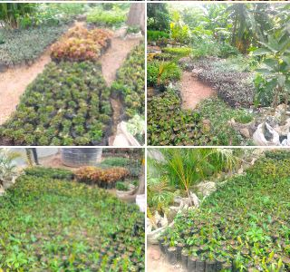 Starting Flower Planting Business in Nigeria (Horticulture)