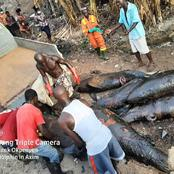 Dead dolphins: MCE and FDA seize smoked dolphins from residents at Axim - photos