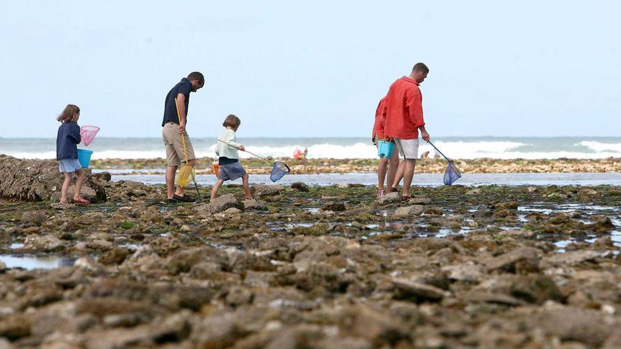 Île d'Oléron: interdiction temporaire de pêcher la palourde sur le secteur de Vert Bois