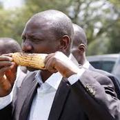 Kenyans React After Seeing What DP Ruto Was Eating in a Rally While in Murang'a County -VIDEO