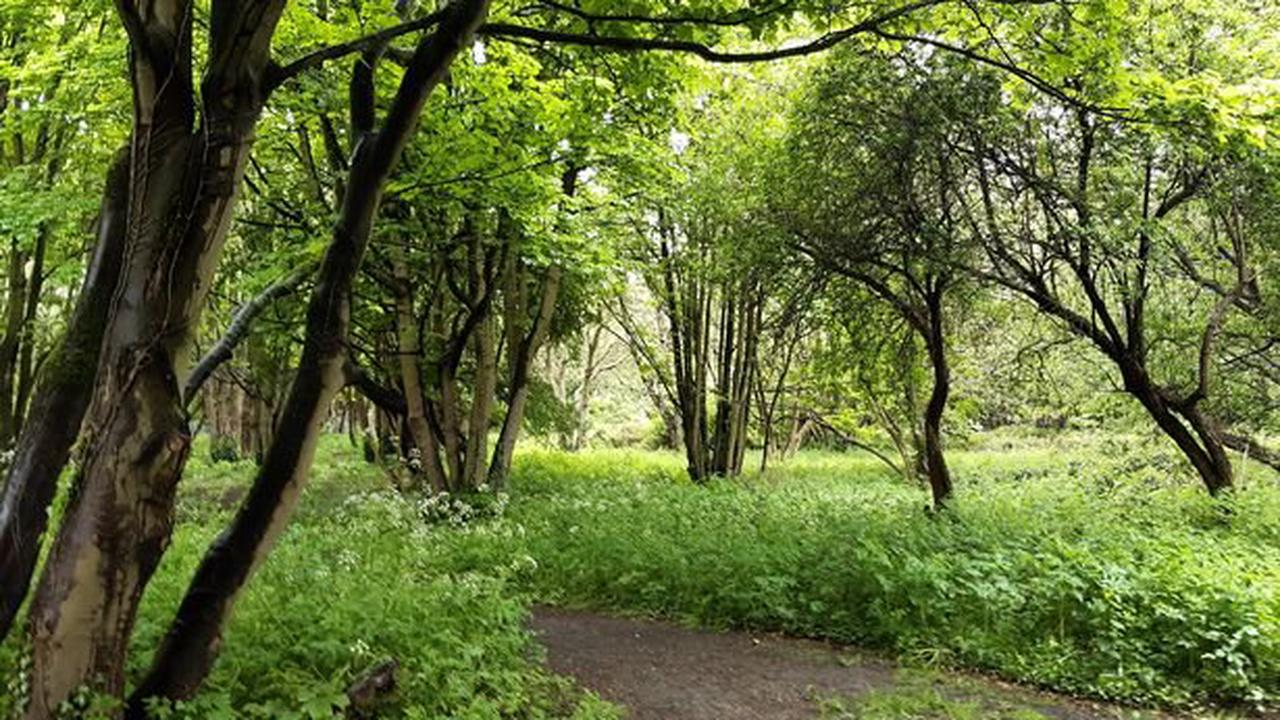 One million extra trees to form Northern Forest between Hull and Liverpool