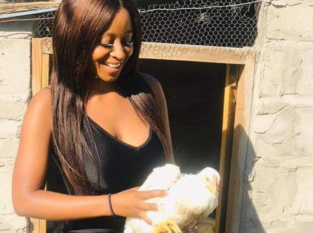 A young poultry farmer woke up to 174 of her chickens murdered by an alleged business saboteur.