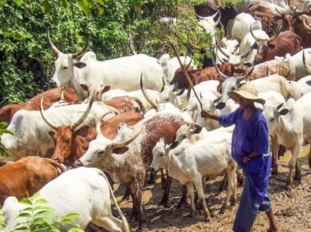OPINION: Fulani Herdsmen are God-fearing, Appreciate Them for Making Positive Impact in Nigeria