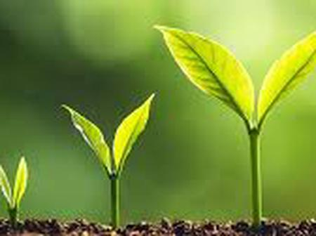 Government plants 7.5 million trees in Lagos