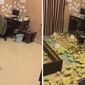 Mum books a psychiatrist appointment for her son, after he turned His room into a Chicken Poultry