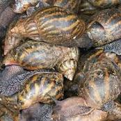 Adou Vianney organise le premier festival de l'escargot du 5 au 7 Mars 2021 à l'Université FHB