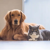 6 tricks to make your Dog and Cat to get along with each other