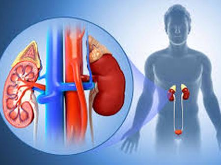 If You Don't Want To Have Kidney Surgery Stop Holding Your Urine, See The Health Implications.