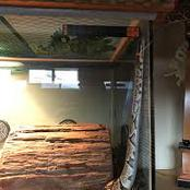 Snake escaped tank to eat owner during her sleep.