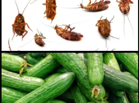 Say Goodbye To Cockroaches In Your Home With These Tips
