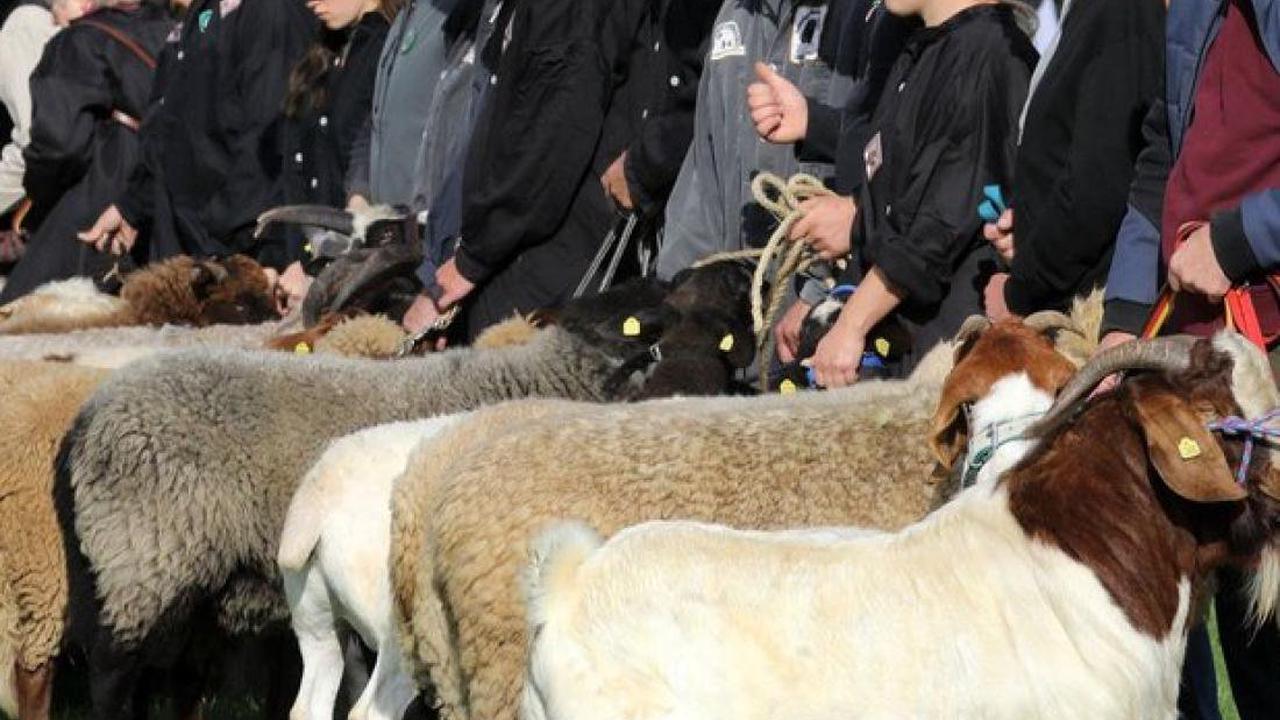 Rettungsplan: 41,2 Cent Fleischabgabe für mehr Tierwohl