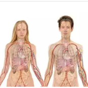 25 Amazing Things About the Human Body.