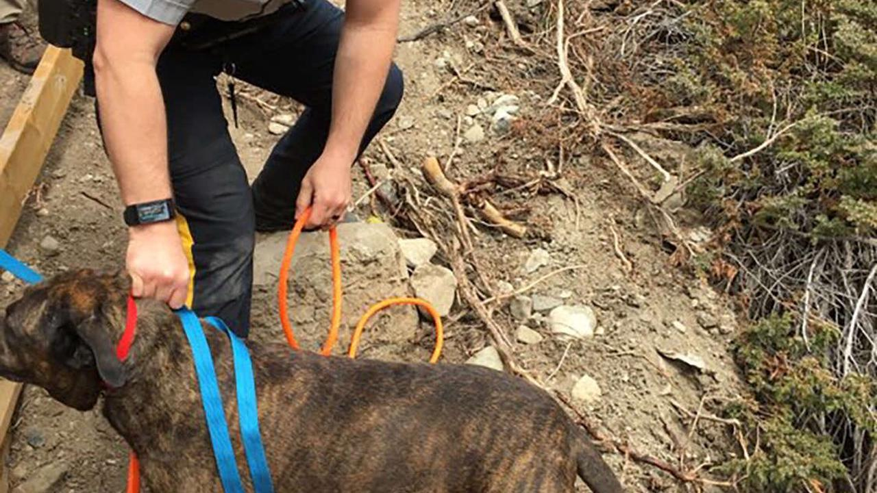 Dog Stuck on 98-Foot Cliff Overlooking Waterfall Saved After 'Rare and Risky Canine Rescue'