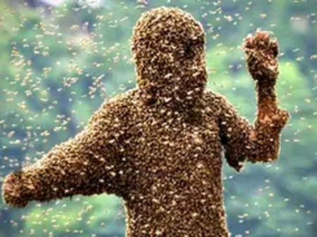 Tarkwa school boy in critical condition after bee attack