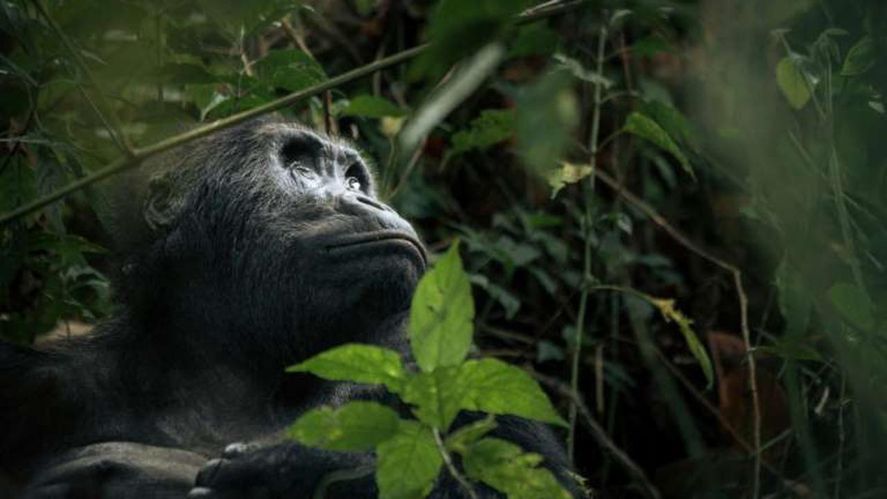 Rangers at DR Congo wildlife haven protest over pay