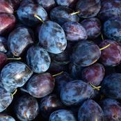 Healthy Benefits Of Eating Plum Fruit