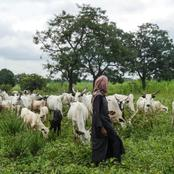 Quit Order to Herders: Northern Traditional Rulers Send Warning to Akeredolu.