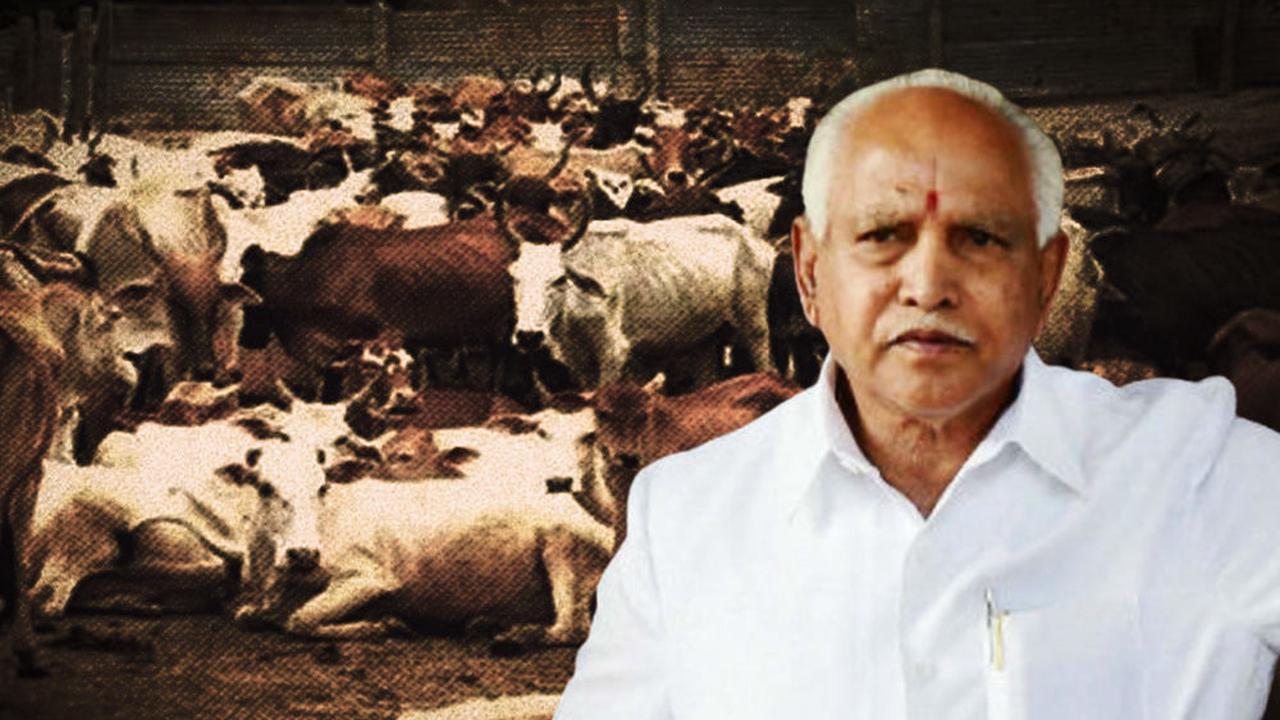 Karnataka Gives Nod To Anti-Cow Slaughter Ordinance, But No Ban On Beef Consumption