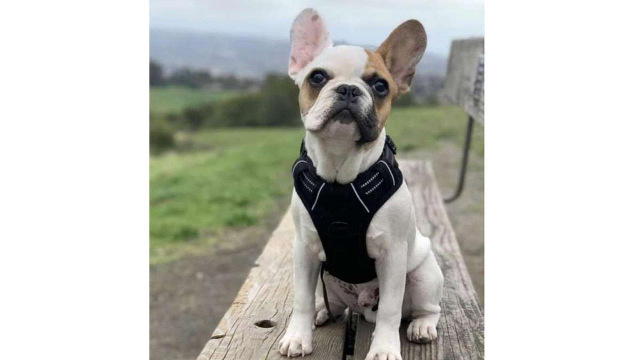 Greene County sheriff looking for owner of abandoned, emaciated dog