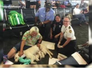 La chienne s'allonge au milieu d'un aéroport et ne bouge plus, la suite donne les larmes aux yeux