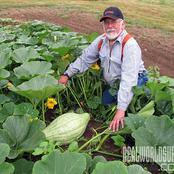 Garden Tips To Plant Hubbard