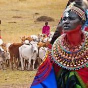 Children, Cows Has The Same Values In This African Land, See Where They are Found and Other Culture