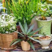 How to choose to plant containers
