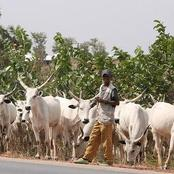Read What The Returning Herdsmen Reportedly Did At Igangan