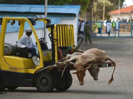 KDF Fights to Retain The Running of Kenya Meat Commission