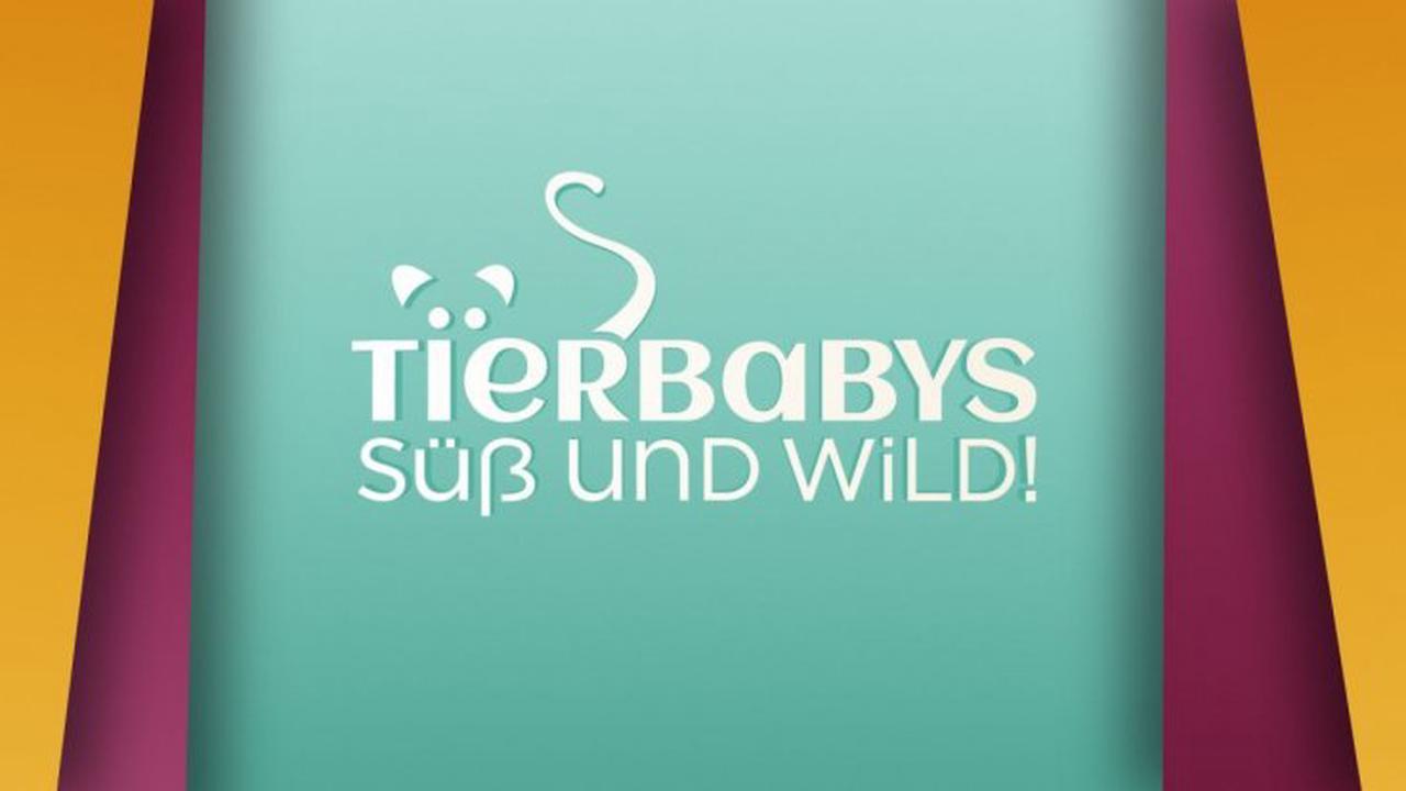 """""""Tierbabys - süß und wild!"""" bei Vox im Live-Stream und TV: Folge 5 aus der 7. Staffel der Tierreihe"""