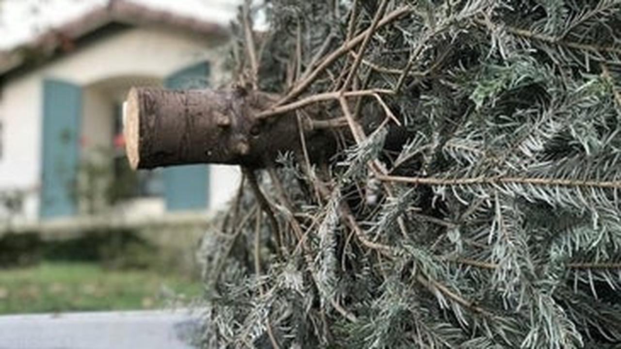 Around Berkeley: County Parks Accepting Recycled Christmas Trees
