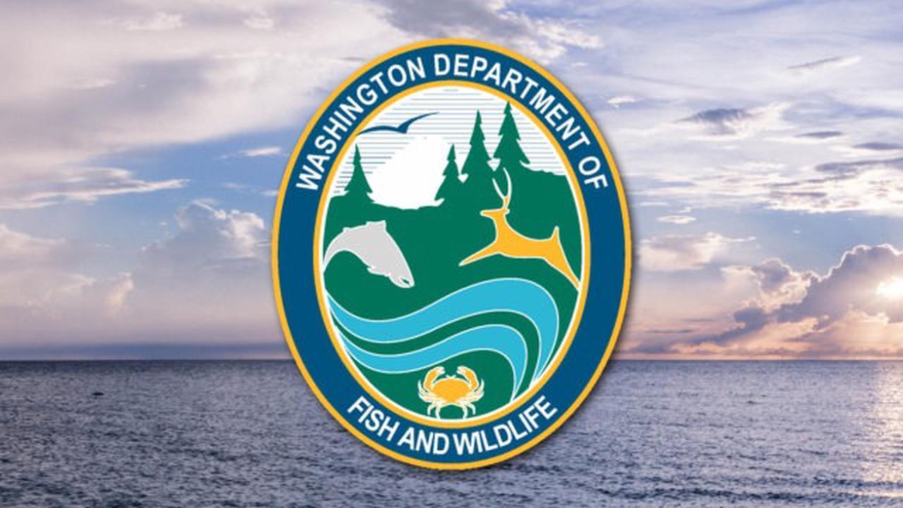 Marine toxins close Central Washington coast crab fishing
