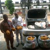 NDLEA Intercepts 115kg of Compressed Cannabis at Ahoada, See Photos