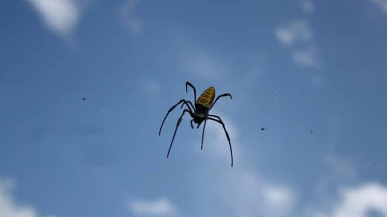 Voilà pourquoi il est déconseillé de se débarrasser d'araignées à l'aide d'un aspirateur