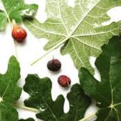 منحة ربانية لا يعلمة الكثير يخفض الكوليسترول في الدم وتحمي من الإمساك وتنقص الوزن وغنية بالألياف
