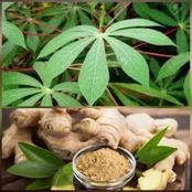 Boil Cassava Leaves And Ginger Together To Cure These Diseases