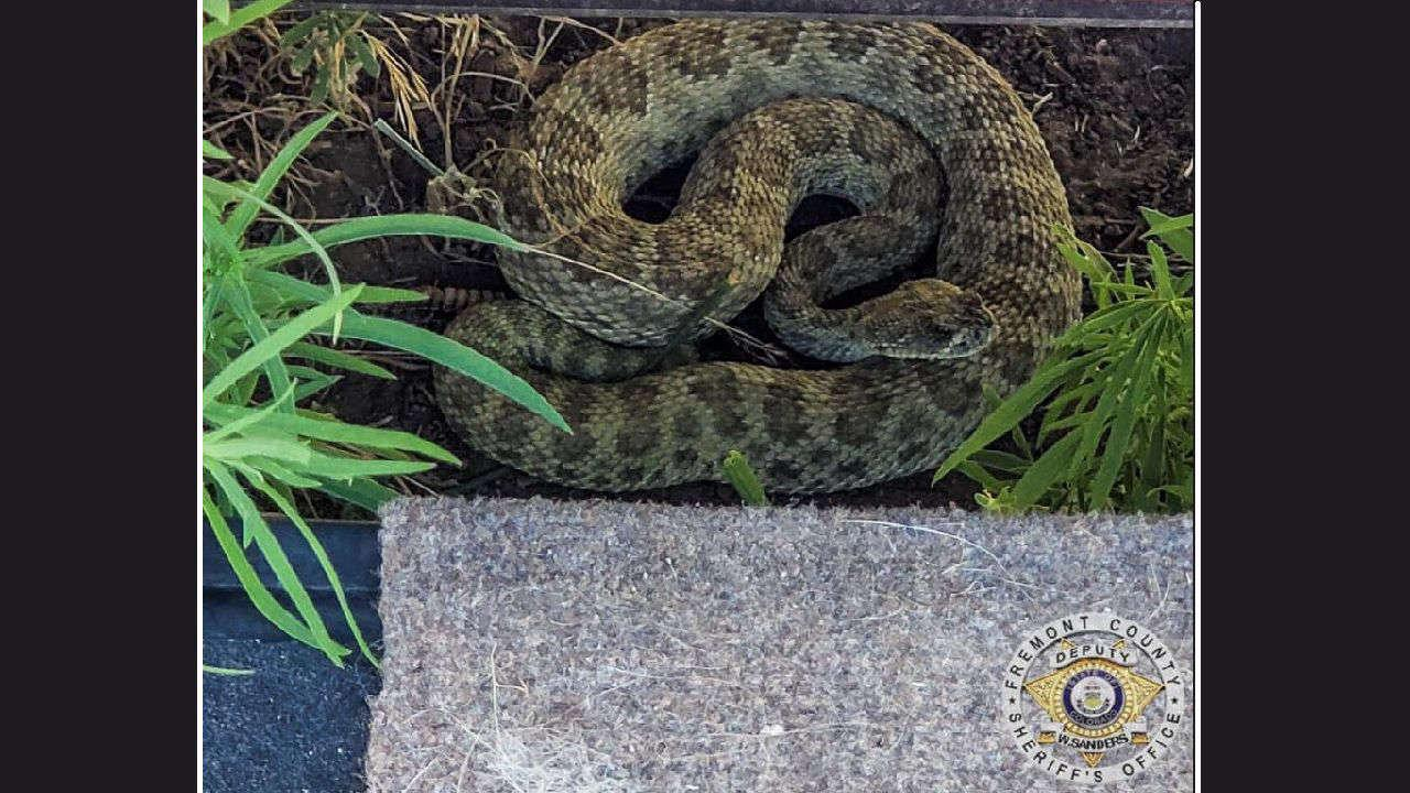 Rattlesnakes are more active in the spring, at least 1 reported bite in Colorado this season