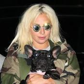 American artist, Lady Gaga proposes to pay N240M for her taken dogs