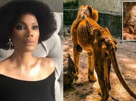Funmi Iyanda reacts as lion and other animals are discovered starved and underfed in Nigeria zoo