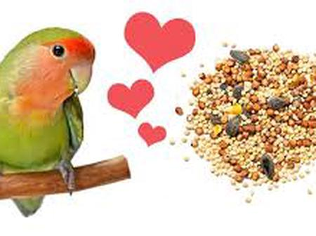 Lovers zone: 14 Fun Facts About Lovebirds that can change your love life