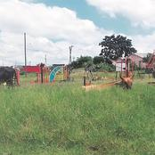 Cow in Pietermaritzburg caught doing this. Check here