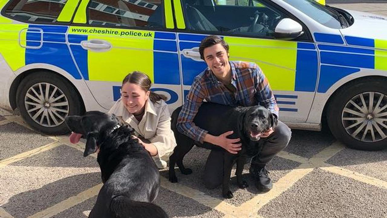 Can you help reunite these stolen dogs with their owners?