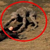 List of mysterious and strange animals in the world