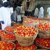 Foodstuffs Blockage to the South: We've Lost Over 10 Billion Naira in a Week: says Northern Tomato Traders