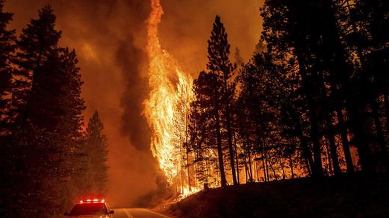 Düstere US-Prognose  Für Waldbrände fehlen bald die Bäume