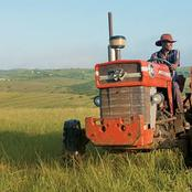 Zimbabwe on the verge of achieving record high traditional grain harvest