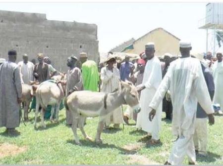 Cheers In Kano As Ganduje Aide Distributes Donkeys As Empowerment To Youths, (Photos)