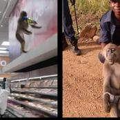Look at what this monkey was arrested for.