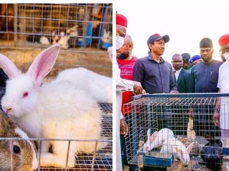 People React as Imo State Governor Empowers Youth With Two Rabbits Per Youth (Photos)